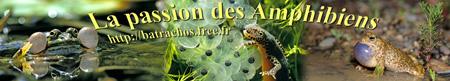 La passion des amphibiens