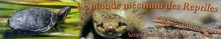 Le monde méconnu des reptiles